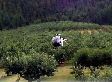 helicopter drying cherries